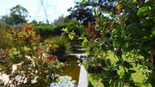 בריכות נוי לגינה