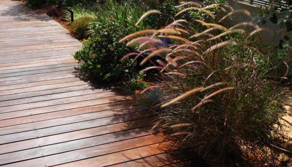 קיסריה: צמחיה מותאמת לקו חוף ים