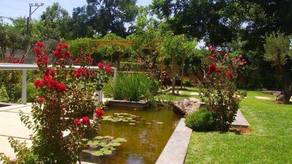 מים בגינה
