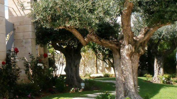 קיסריה: שבילים של פריחות